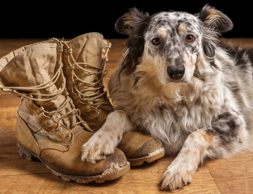 Support Dogs on Deployment